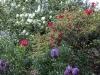 Informal mix of evergreen and flowering shrubs, bulbs and perennials
